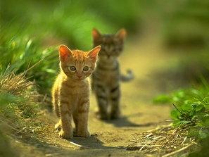 Kitten Path