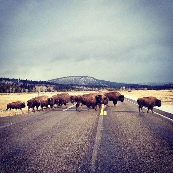 Herd mentality?
